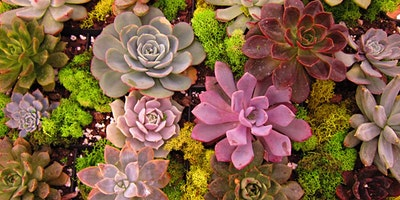 Secrets to Successful Succulent Landscaping