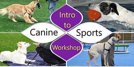 Intro to Canine Sports tickets