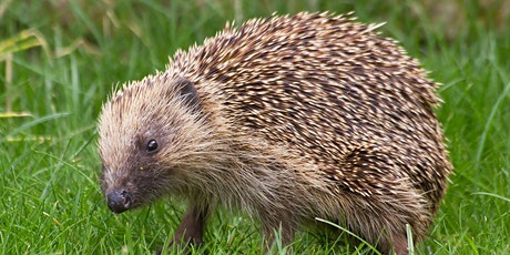 Hedgehog Friendly Campus – Hedgehog House building tickets