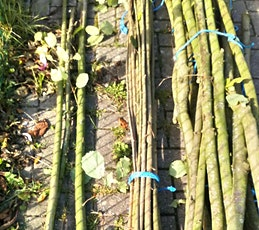 Wild in the woods: Coppicing at Aldermoors tickets