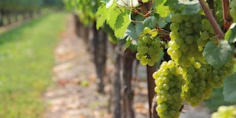 ABC du vin : découvrir les essentiels en compagnie d'un passionné ! billets