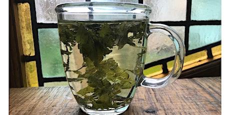 Mystery Herbal Tea Tasting tickets