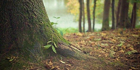 Guided Walk and Botanical Art in Kilcornan Woods tickets