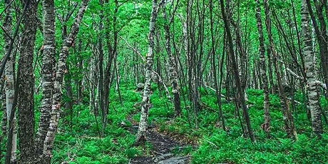 Webinar: Managing Forests for Carbon and Climate Change tickets