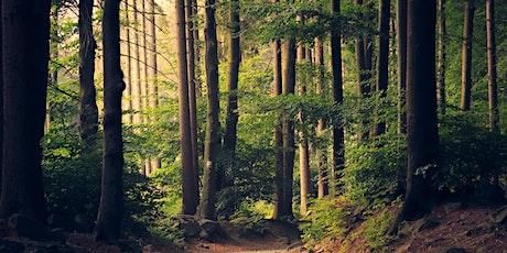 Nytt klima – nytt skogbruk? Nye skogprodukter for bærekraftig vekst tickets