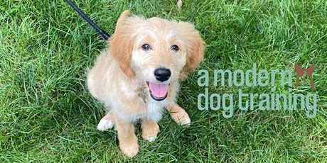 Small Puppy Social Playgroup- UNDER 25lbs tickets