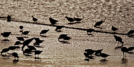 Introduction to Shorebirds Part 1 tickets