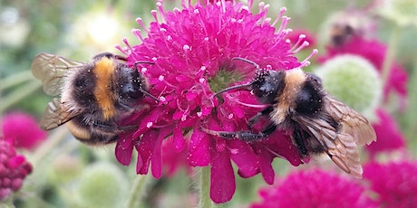 Gardening for Wildlife: Care and Food tickets