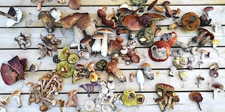 Halloween Fungi Foray in Holcombe Brook tickets