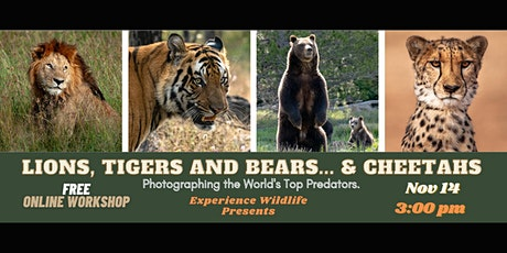 Lions, Tigers and Bears... and Cheetahs. Online Workshop tickets