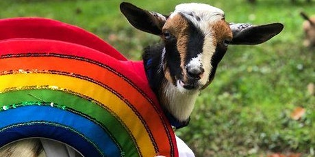 Halloween Costume Goat Yoga in Alexandria at Ease Yoga and Cafe tickets