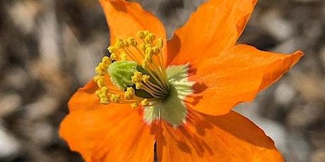 Poppy Hour: Wildfire tickets