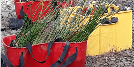 Restoring Broz Park Wetland - Community Planting Event tickets