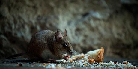 Managing mice plagues