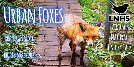 Urban Foxes by Dawn Scott tickets
