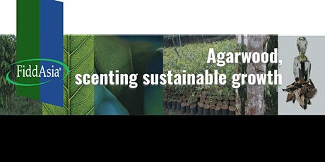 Agarwood, scenting sustainable growth tickets