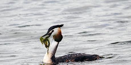 Resident & Wintering Waterfowl tickets