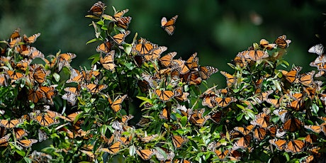 Beauty on the Wing: Life Story of the Monarch Butterfly tickets