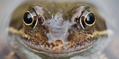 Amphibian Ecology & Survey tickets