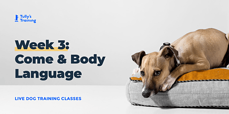 Tully's Training LIVE Week 3: Leash Manners, Come and Body Language tickets