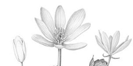 4 Week Botanical Illustration Class tickets