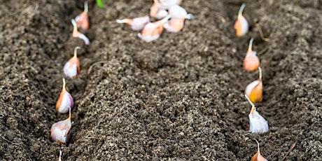 Washington Youth Garden Garlic Planting tickets