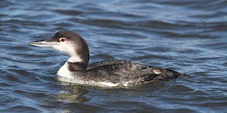 Raritan Bay Waterfront Park Bird Walk tickets