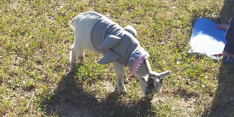 Spooky Goat Yoga! - Sat, Oct 24 @ 10am tickets
