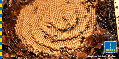 Creating homes for Stingless Bees tickets