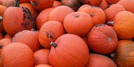 Primrose Vale's Pick Your Own Pumpkin Sun 25th October tickets