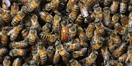 December - ONLINE Beginning Beekeeping Class at The Bee Store - Inspections tickets