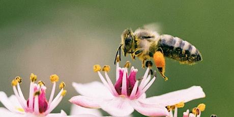 March - ONLINE Beginning Beekeeping Class  - Spring Management tickets
