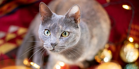 Holiday Pet Portraits with Maree Rattray tickets