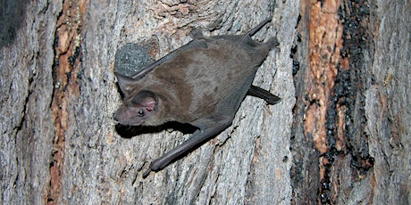 Australian Microbat Roost Selection by Dr Niels Rueegger tickets