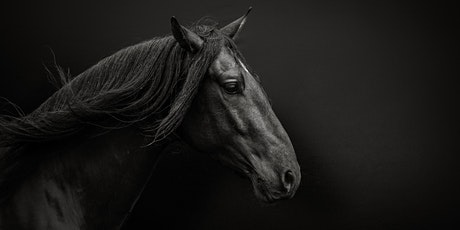 7 Steps Revealed to Creating Beautiful Equine Portraits - Webinar tickets