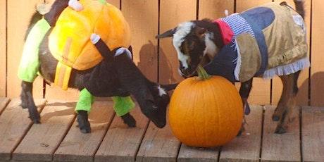 Halloween Goat Yoga tickets