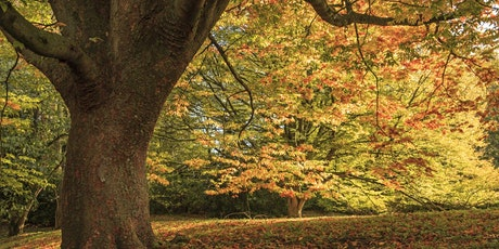 Timed entry to Anglesey Abbey, Gardens and Lode Mill (26 Oct - 1 Nov) tickets