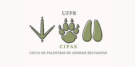 CIPAS - UFPR ingressos