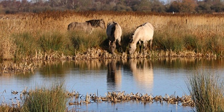 Timed entry to Wicken Fen National Nature Reserve (26 Oct - 1 Nov) tickets