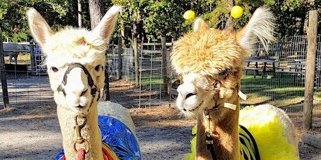 Fall on the Farm with the Halloween Alpacas tickets