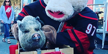 "Fun at the Ranch with special guest Hamilton,""Triangle's lucky playoff pig"" tickets"