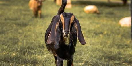 Kids Only Goat Yoga Class! tickets