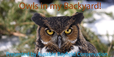Owls in my Backyard!  See live owls from Mountsberg Raptor Centre! tickets