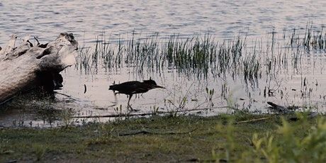 Lake Champlain-Richelieu River Study Performance Indicators Webinar tickets