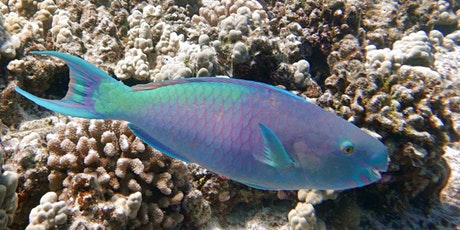FISH ID | Parrotfish tickets