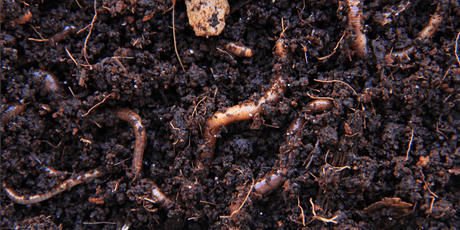 Introduction to Worm Farming tickets