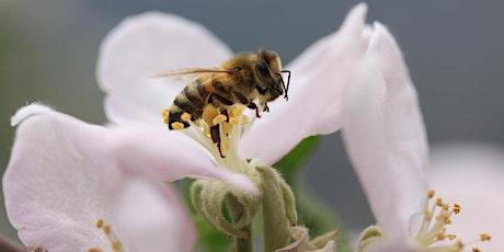 Salviamo le api... per salvarci. biglietti