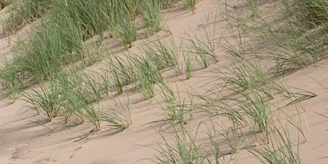 The wildlife and conservation of Haverigg dunes tickets