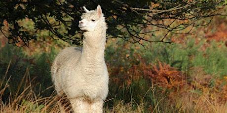 Livestock and Beacon Ranger Guided Walk tickets