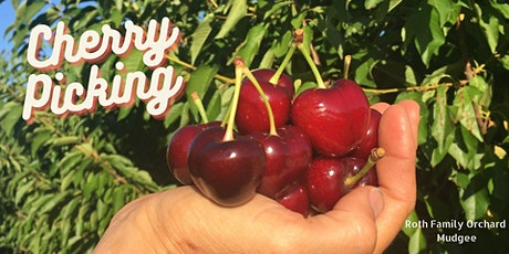 Cherries - Pick Your Own  - Mudgee tickets